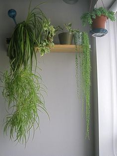 House plants are beautiful and inexpensive solutions for enriching color palette, personalizing rooms, and enhancing Eco-friendly home decorating