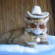 25 Best Cats In Cowboy Hats Images In 2019 Cowboy Hats