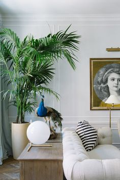 Palm trees are a beautiful way to accessorize an empty corner in your house. Check out the black and white chevron pillow! It's a great way to accessorize a white couch and walls.