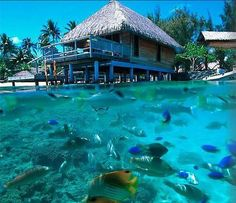 Awesome, out the back door.Bora Bora Hotel In Bora Bora