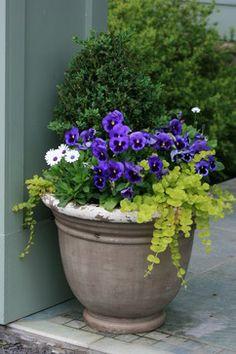 Container Gardens - traditional - landscape - New York - Bloom Landscape Design and Fine Gardening Service