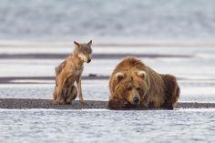 unlikely animal friends | Welcome to r/unlikelyfriends!