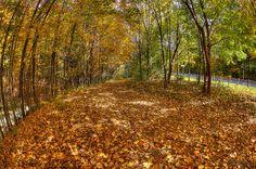 Autumn in Deerlick Creek Park