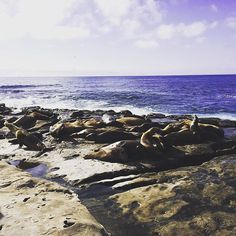 Gotta love the beautiful La Jolla Cove with all the sun bathing seals. Did you know our Carlsbad office is a quick drive from La Jolla and Orange County?  This makes our new flagship office the ideal place for all your plastic surgery and skin care needs. Find out more @iconicplasticsurgery . 🏥: Address: 3144 El Camino Real Suite 200, Carlsbad, CA . 💻: Email Appts : Iconicplasticsurgery@gmail.com . 📝: Trained at: Johns Hopkins, Cleveland Clinic, UCSD . #plasticsurgery #instagram…