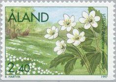 060314 wood anemone ~ ◇Aland  1997    Wood anemone (Anemone nemorosa)