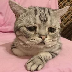 Meet Luhu, The Saddest Cat In The World Whose Photos Will Break Your Heart cute cat and kittens Cute Kittens, Little Kittens, Animals And Pets, Baby Animals, Funny Animals, Cute Animals, Cool Cats, Ugly Cat, World Cat