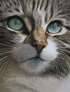 ¡Cuántos matices de color en este detalle de la cara de un gato y todos hermosos!