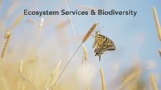 Ecosystem services and Biodiversity - Science for Environment Policy