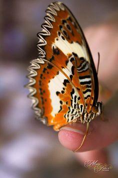 #Butterfly #wing