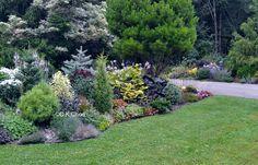 conifers garden in canada - Google-Suche