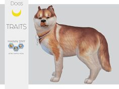 TS4 Marvin Stiff - The Husky!My very pretty husky for you guys to adopt! Things you will NEED to download!• Liam-sims Cutted Ears - Here • blahberry-pancake Chain Collar - Here Go here to download my...