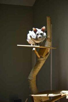 Spynx Cat on a Homemade Cat Tree. Those cats are so fcking creepy, I love them like crazyballs