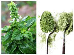 Cool Plants, Natural Remedies, Dandelion, Grass, Health, Nature, Spirit, Medicine, Plant