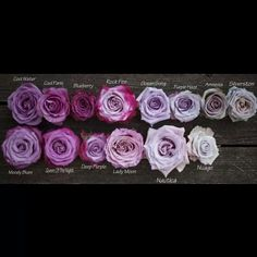 Purple & Lavender Roses - Colour & Name Guide #KnowYourFlowers