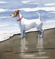 JACK RUSSELL TERRIER Art Print Watercolor Signed by D J Rogers