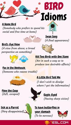 BIRD Idioms: 27 Useful Idioms about Birds with Examples English Vocabulary Words, English Phrases, Learn English Words, English Vinglish, English Grammar, English Writing Skills, English Lessons, French Lessons, Spanish Lessons