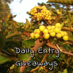 Cryss Loves Stuff: Daily Entry Giveaways (Ending 2015/09/10)