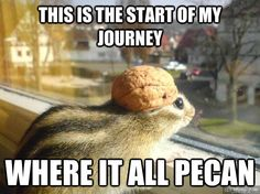 Although the nut on the chipmunks head is not a pecan, it's still cute & we love all critters here at MNPG.