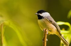 Nature Photography. Birds
