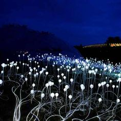 "Bruce Munro's ""Field of Light"" installation at the Eden Project in Cornwall, England."