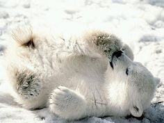 cute baby animals from thedesigninspiration.com