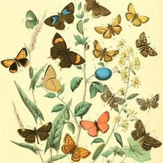 The Biodiversity Heritage Library = AMAZING resource for prints of flora and fauna!