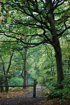 ~Hockley woods, Essex, England~happy hunting ground!!!