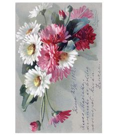 Vintage Postcard White, Pink, Red flowers signed by C Klein ~~ Imagine finding this in your mailbox!