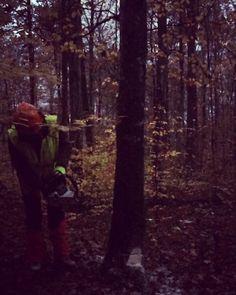 Fall has come - trees are falling  Hannah is cutting #lumber  #erntezeit im #wald  #holzernte #stihl #timbersports #motorsäge #chainsaw #übungmachtdiemeisterin #greenenergy #forstwirtschaft #nachhaltigkeit #pefc #sustainability #huntinglife @engelbert_strauss #jagdrevier #jagd #jakt #chasse #herbstwald #leavesarefalling #forestry #jagt #baumfällt #treecutting #partofnature #revierarbeit #schwäbischealb #swabianalps #buche