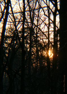 Oh, yes... it's another beautiful early morning in GA as I take in the spectacle of the rising sun through the trees at dawn...