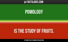 Pomology   is the study of fruits.
