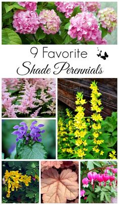 Favorite Shade Perennials that are easy to grow
