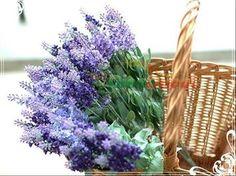 Lavender is lavender. colour