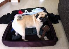 """""""I've packed """"Monkey""""! So, where are we going?"""""""