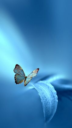 Download this Wallpaper iPhone 5 - Animal/Butterfly (720x1280) for all your Phones and Tablets.