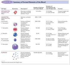 Major components of blood, the molecular structure of hemoglobin, how blood cells are recycled, understanding blood type, rh factor and agglutination. Medical Laboratory Science, Science Student, Medizinisches Labor, Rh Factor, Blood Components, Nursing School Notes, Nursing Mnemonics, Phlebotomy, Nursing Tips