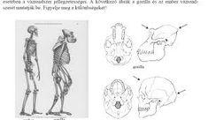 ember és csimpánz fog összehasonlítása - Google-keresés Google, Art, Art Background, Kunst, Performing Arts, Art Education Resources, Artworks