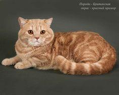 Насморк у котенка лечение в домашних условиях 89