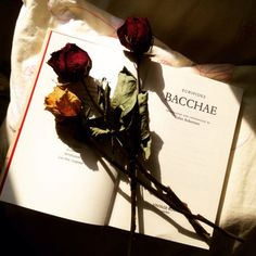 a new translation of bacchae, with roses