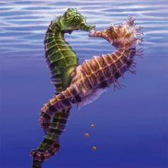 Resultado de imagen para seahorses