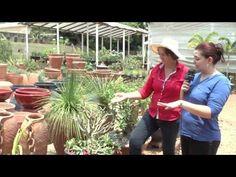 Mat Curso Rosa do Deserto 03 10 15 02 - YouTube