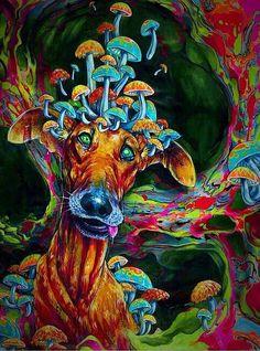Doggie shrooms psychedelia