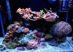 matth6761 - 2011 Featured Nano Reefs - Featured Aquariums - Monthly Featured…