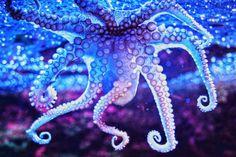 underwater stuff fascinates me...