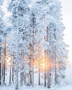 Imagem de winter, snow, and christmas Winter Szenen, I Love Winter, Winter White, Winter Christmas, Christmas Morning, Christmas Time, Snow White, Beautiful Places, Beautiful Pictures