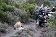 Africa never stops beating, each destination has its own rhythm. There are so many interesting things to see. We have sublime food, exceptional wines, and incredible museums that are important to understand our history. But the best thing about Africa is the wildlife. Take a look at the best way to experience an African Safari as told by our travel expert. #explorersafari #explore #exploreafrica #safari #wildlife #food #travel #traveltoafrica #lion #nature #wild #safarilodge #safaritour #tour Food Travel, Us Travel, Travel Expert, African Safari, Africa Travel, Continents, Museums, Wines, Lion
