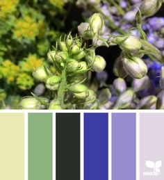 {flora hues} image via: @designseeds
