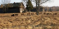 Resurge fauna salvaje en las cercanías de Chernóbil