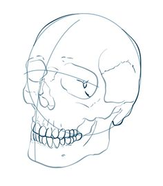 Pix For > How To Draw A Realistic Skull Step By Step