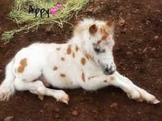 Image result for cute horse